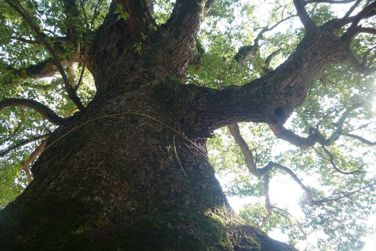 佐賀市,佐賀,整骨院,くすの木,くすのき,楠,ぽかぽか温泉